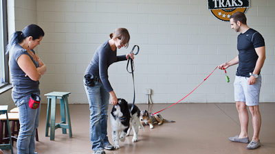 Centre canin Traks | Formation - Éducation, Toilettage - Boutique - Consultation - Réadaptation - Garderie | Laval, Rive-Nord
